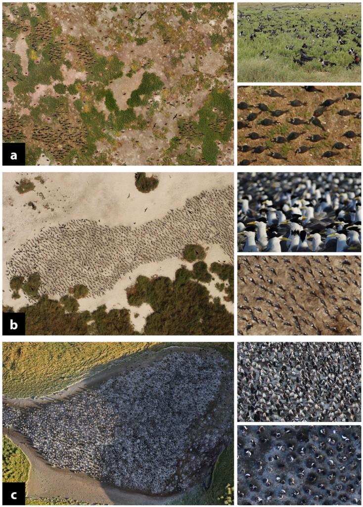 Vue de la faune observée dans les îles autraliennes